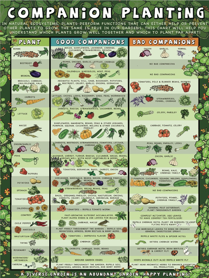Companion Planting Chart 1